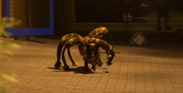 spider-dog-featured
